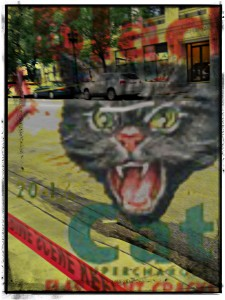 firecrackercat