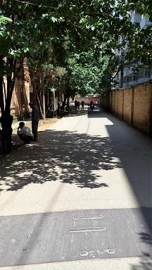 treelinedroad