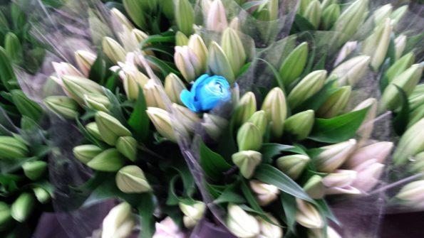 bluerosekunmingflowermarket
